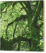 Mossy Tree Wood Print by Athena Mckinzie