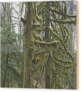 Mossy Trees Wood Print