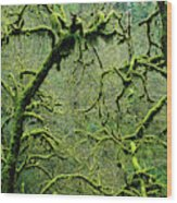 Mossy Trees Leafless In The Winter Wood Print