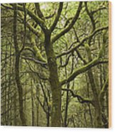 Mossy Welsh Forest  Wood Print