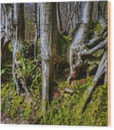 Mossy Woodland  Wood Print