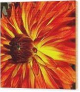 Mostly Orange Dahlia Flower Wood Print