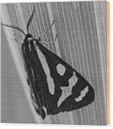 Moth Bw Macro Wood Print
