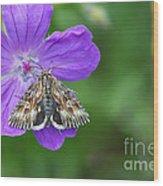 Moth Feeding On Geranium Sanguineum Wood Print