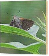 Moth Flower Wood Print