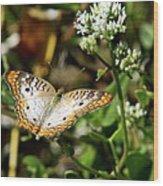 Moth On White Flower Wood Print
