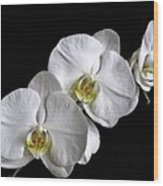Moth Orchid Trio Wood Print by Ron White