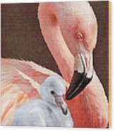 Mother And Baby Flamingo Wood Print
