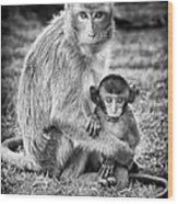 Mother And Baby Monkey Black And White Wood Print