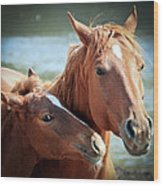 Mother And Filly Wood Print