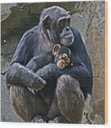 Mother And Child Chimpanzee Wood Print