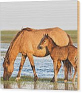 Mother And Foal Wood Print by Bob Decker