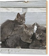 Cat And Kittens Wood Print