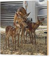 Mother And Two Fawn IIi Wood Print
