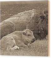 Mother Buffalo And Calf Sepia Wood Print