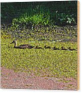 Mother Duck And Baby Ducks Wood Print