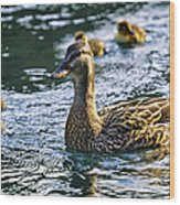 Mother Duck Wood Print