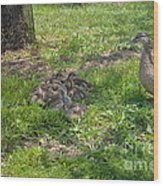 Mother Duck With Nest Wood Print