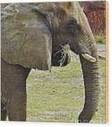 Mother Elephant Wood Print