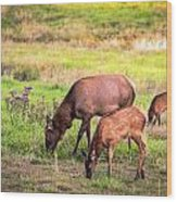 Mother Elk With Her Young Wood Print