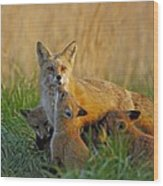 Mother Fox And Kits Wood Print by William Jobes
