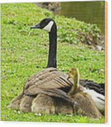 Mother Goose Wood Print by Bruce Brandli