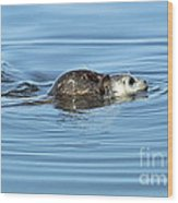 Mother Harbor Seal And Pup Wood Print