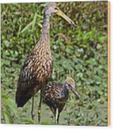 Mother Limpkin And Colt Wood Print