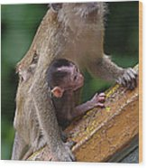 Mother Monkey And Her Baby Wood Print