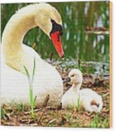 Mother Swan And Baby Wood Print