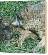 Mother Wolf Nuzzles Cubs Wood Print