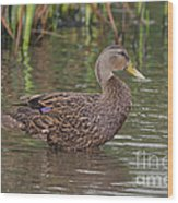 Mottled Duck Drake Wood Print