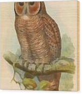 Mottled Wood Owl Wood Print