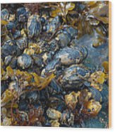 Mound Of Mussels Wood Print by Sarah Crites