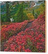 Mount Baker Sunrise Wood Print