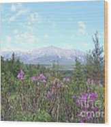 Mount Katahdin And Wild Flowers Wood Print