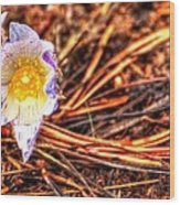Mount Margaret Spring 14379 Wood Print