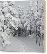Mount Osceola Trail - White Mountains New Hampshire Wood Print