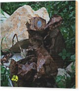 Mount Trashmore - Series Xvi Wood Print