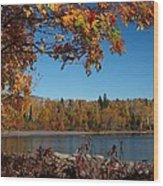 Mountain Ash In Autumn Wood Print