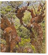 Mountain Beech Rain Forest In Fjordland Np Nz Wood Print