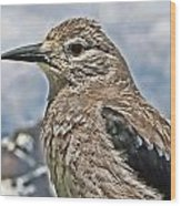 Mountain Bird Wood Print