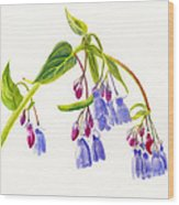 Mountain Bluebells Wood Print by Sharon Freeman