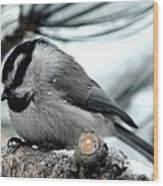 Mountain Chickadee During A Light Snow Wood Print