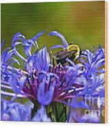 Mountain Cornflower And Bumble Bee Wood Print by Byron Varvarigos