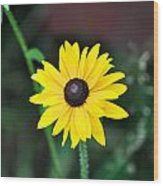 Mountain Daisy Yellow Wood Print
