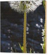 Mountain Dandelion Wood Print