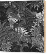 Mountain Ferns 1 Wood Print by Roger Snyder