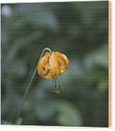 Mountain Flower Wood Print
