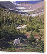 Mountain Goat 5 Wood Print